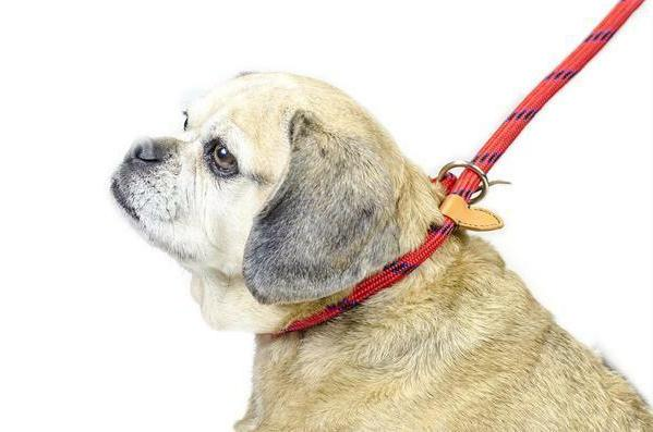 Adjustable Loop Leash with Duper Soft 6 Ft by