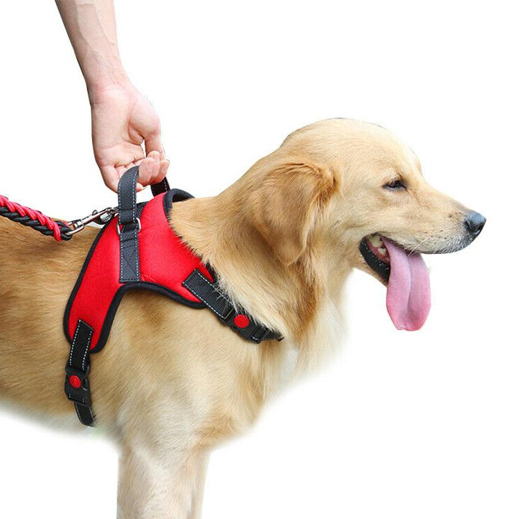 Dog Harness Pull Dog with M