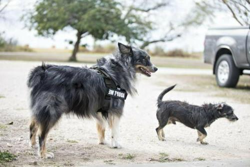 Big Dog Harness with Outdoor for