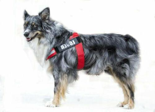 No Pull Adjustable with Vest for Large Breed Dogs