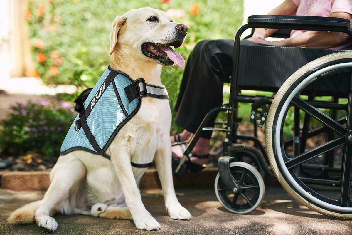 Service Dog For Harness With Handle